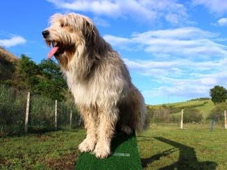 campo agility dog teramo